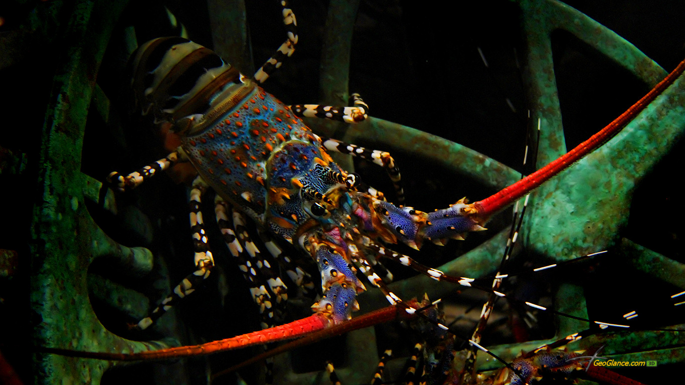 http://1.bp.blogspot.com/-vtP_JWARre0/Tol2dthzO6I/AAAAAAAAA-Y/9eeRt2GRrDc/s1600/10_lobster_1366x768-705518.jpg