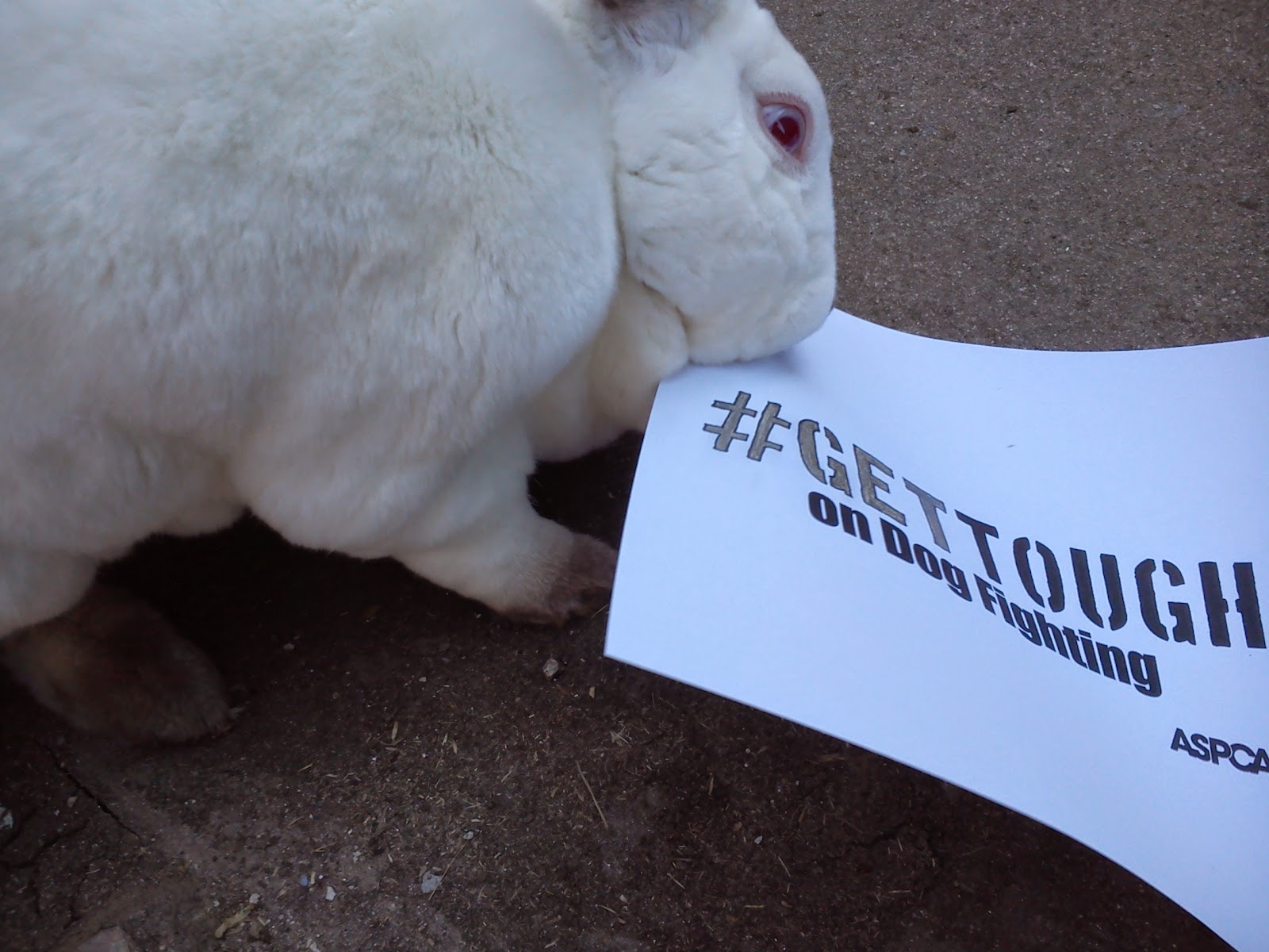 Speedy The Cheeky House Bunny Disapproving Bun Day Dog