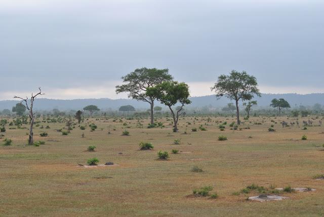 Mikumi National Park Tanzania