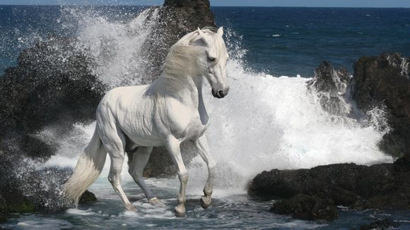 Horses Photo Art Wallpaper 08