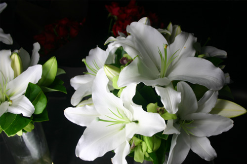 White oriental green singapore orchid wedding adam 39 s for Au jardin singapore wedding