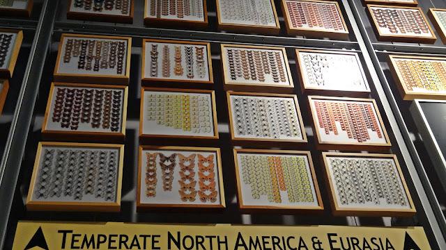 Schmetterlinge Amerika Eurasia Liste Wand Bilder Gainsville Florida
