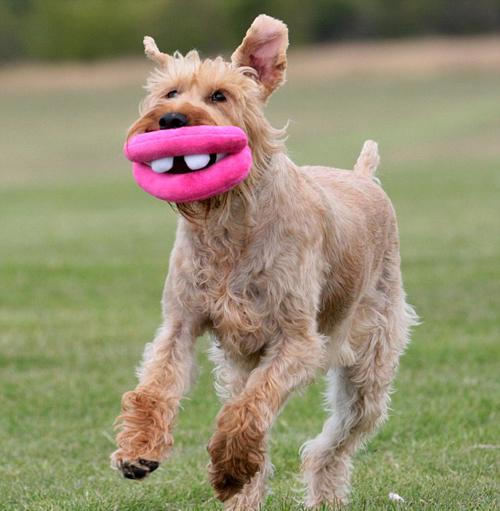 Fotos de perros muy graciosas y divertidas