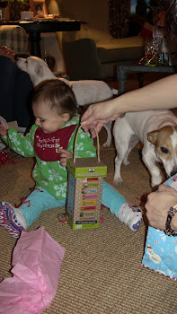 Christmas with Jack Russells