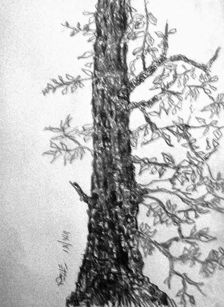 Arboris