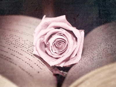 Pink Rose Between Book Papers Old Looking Photo HD Wallpaper