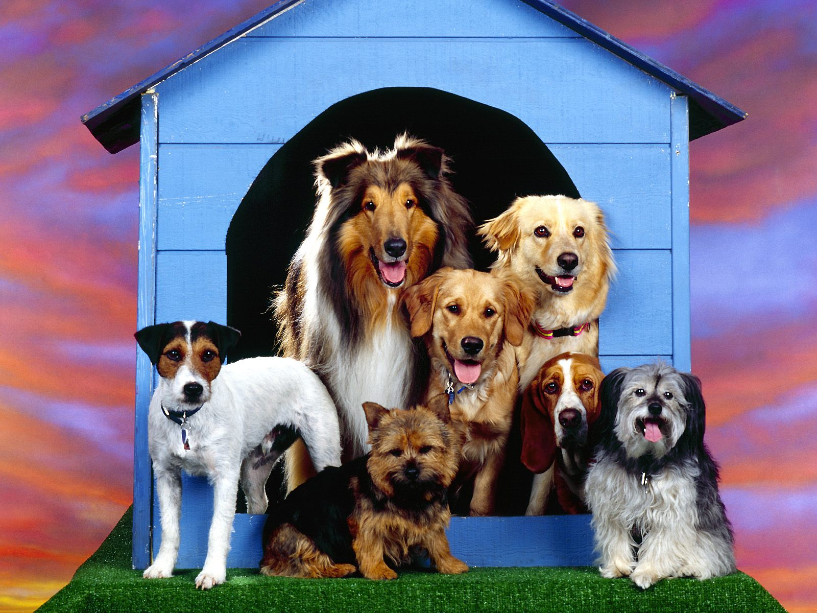 http://1.bp.blogspot.com/-vvZoa3IOZVU/TzU03QWA60I/AAAAAAAAAso/VoCGGKI6isw/s1600/dog-wallpapers-08.jpg