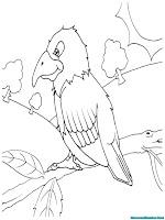 Halaman Mewarnai Binatang Burung Beo