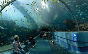 akuarium terbesar di dunia2