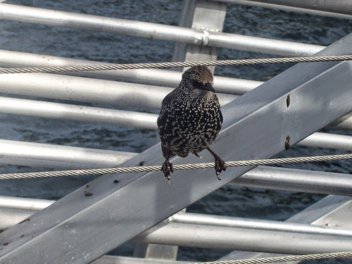 Bird standing on a wire fence