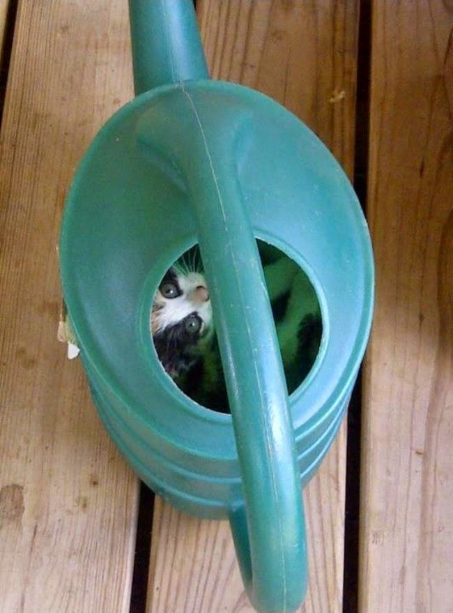 hide and seek kittens