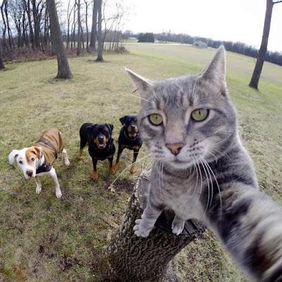 Foto Kucing Yang Gemar Selfie 01