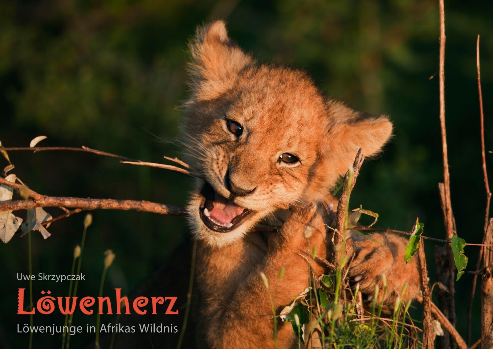 LÖWENHERZ - Löwenjunge in Afrikas Wildnis. Kalender von Uwe Skrzypczak