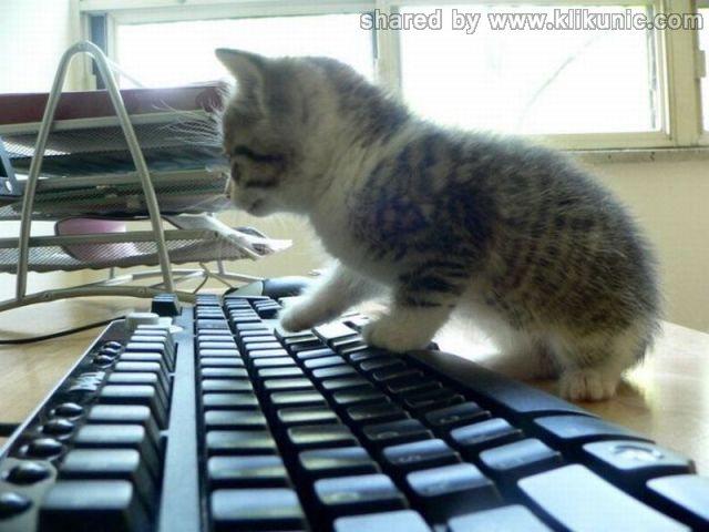 http://1.bp.blogspot.com/-vwbvLn1BaZ0/TXzFPgmI9vI/AAAAAAAARFQ/7v9QTHy10So/s1600/these_funny_animals_635_640_28.jpg