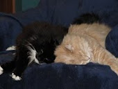 Figaro & Bailey