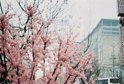 flores invernais