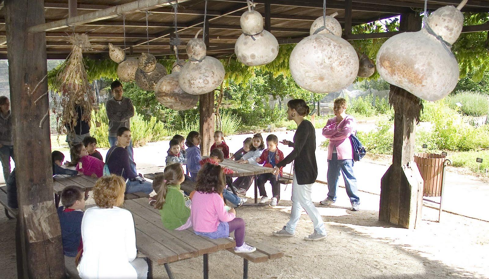 Familias y amigos de platero visita al jard n bot nico for Como ir al jardin botanico