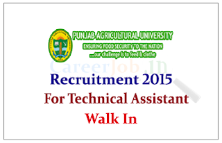 Punjab Agriculture University Recruitment 2015 for the post of Technical Assistant