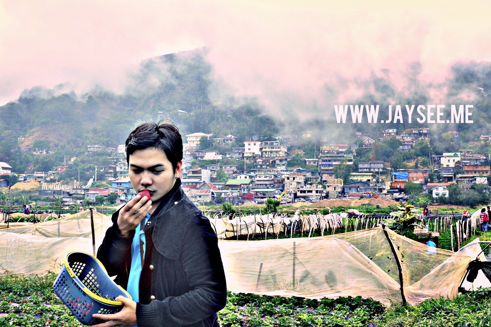 jaysee pingkian jayseeblabs The Strawberry Farm Baguio