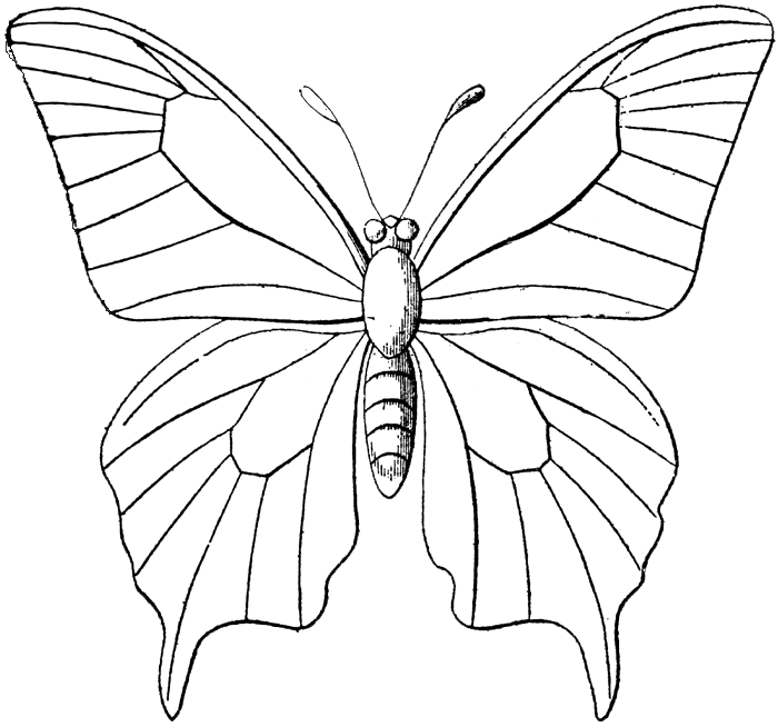 Butterfly designs to color - photo#27