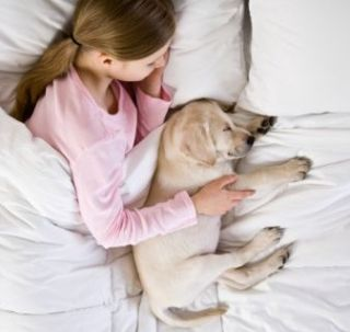 Sharing the Bed with Your Fave Pet