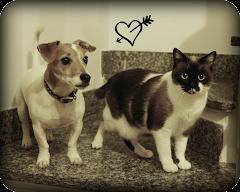Topo il jack, Atena la gatta e Wasaby la dolce meticcia :)