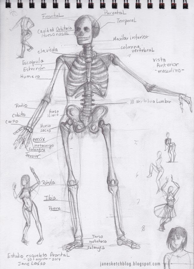 Esqueleto Dibujo a Lapiz Dibujo de Esqueleto Humano