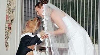 [Citizen6] 6 Pernikahan Manusia dengan Hewan Paling Heboh