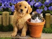 yeaaahhhhh. ambik kau. Ooooohhhhh. jangan. tidakkk. cat dog fight