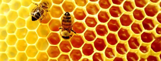 foto lebah