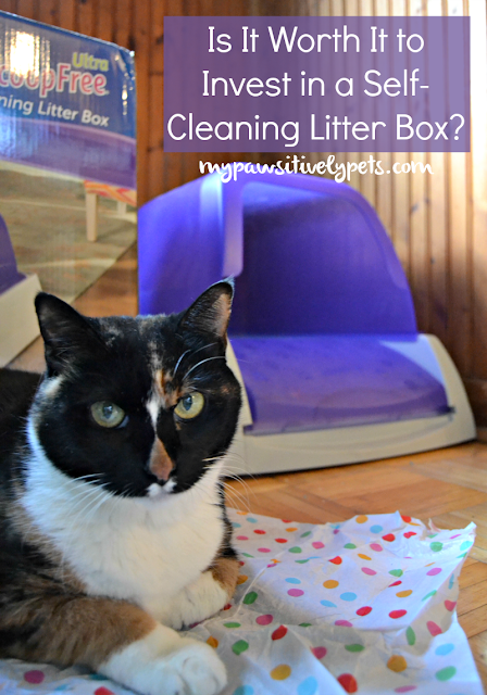 Does Cat Litter Work For Dogs
