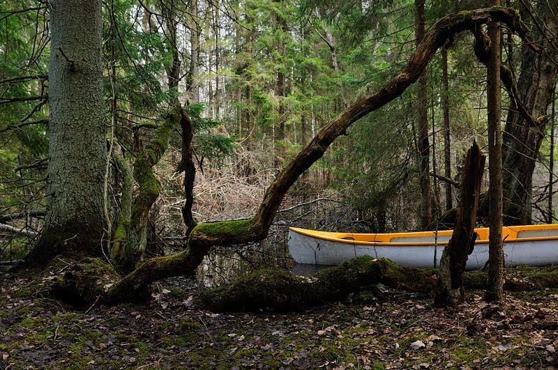 suurvee ajal kanuuga Pedja jõel, canoeing on Pedja river on high water season
