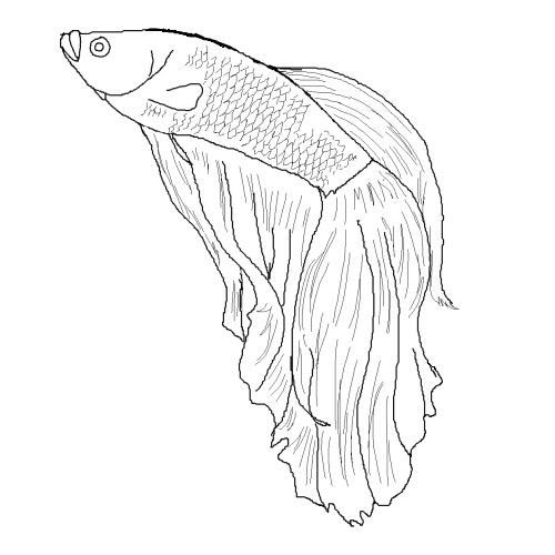 Flying Fish Pages Coloring Pages
