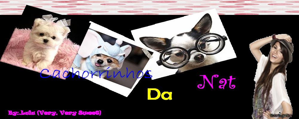 Cachorrinhos da Nat