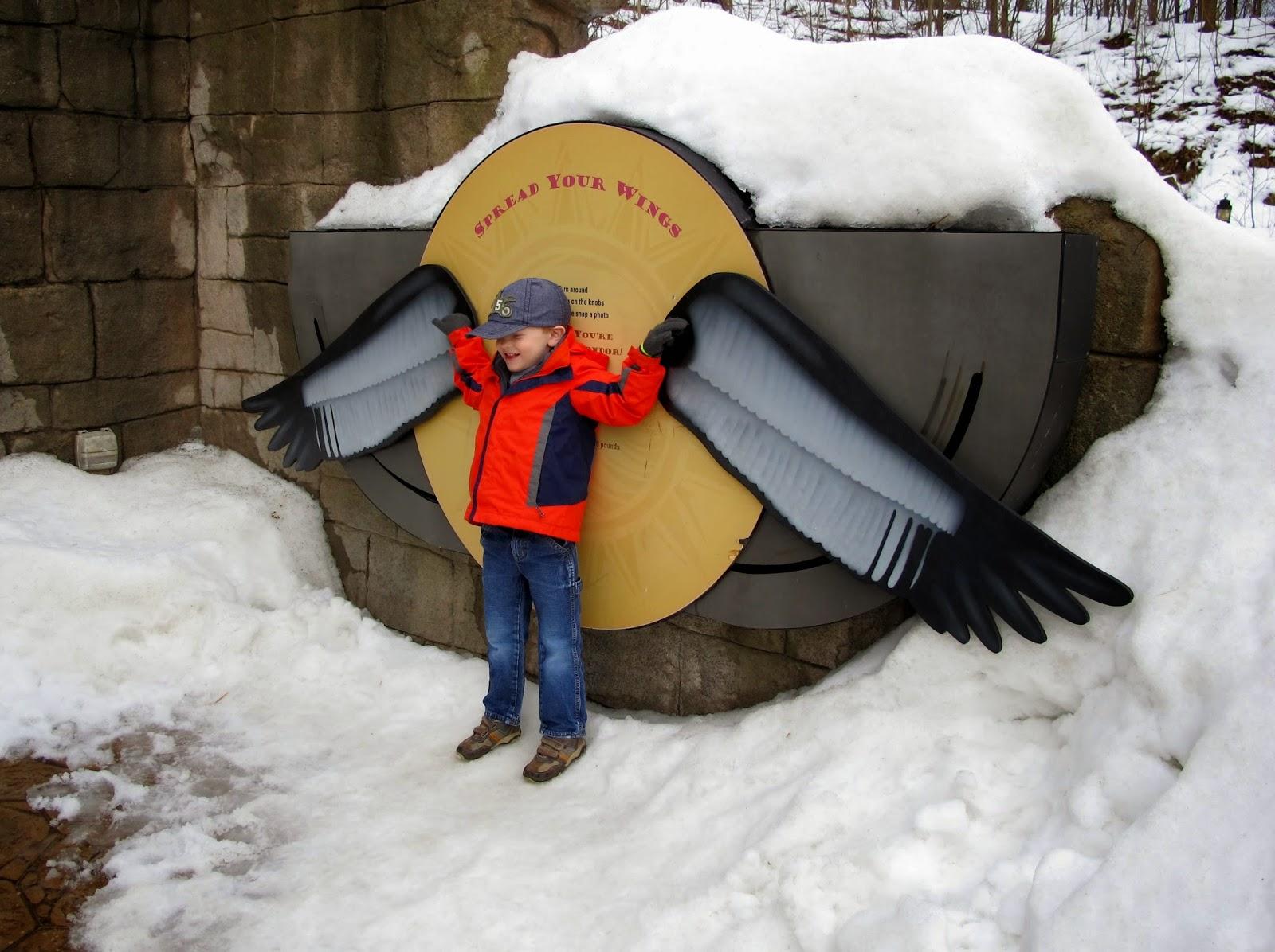 Porter's Condor Wingspan