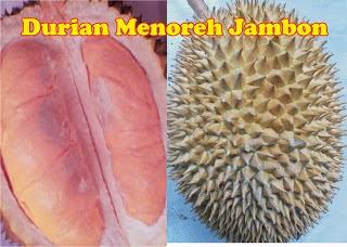 Durian Menoreh Jambon