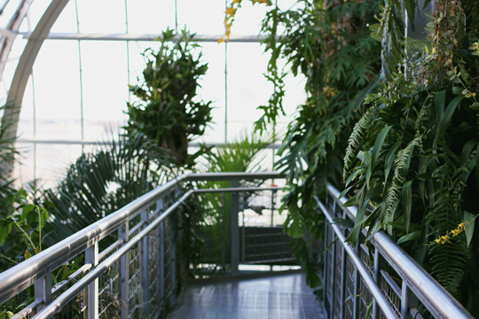 mezzanine in jungle room of United States Botanic Garden