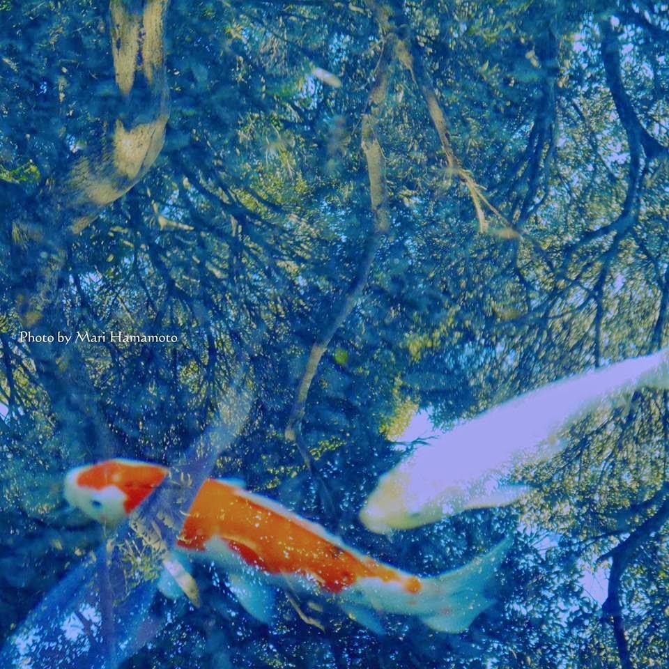 peces en el lago