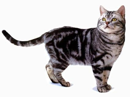facts about cat