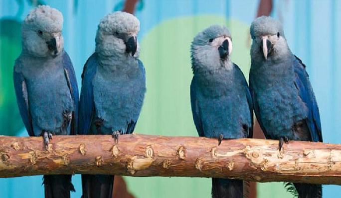 ararinha azul passarinho