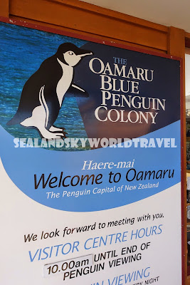 Oamura 企鵝, Blue penguin colony