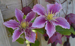 Kesällä kukkii  (klik)