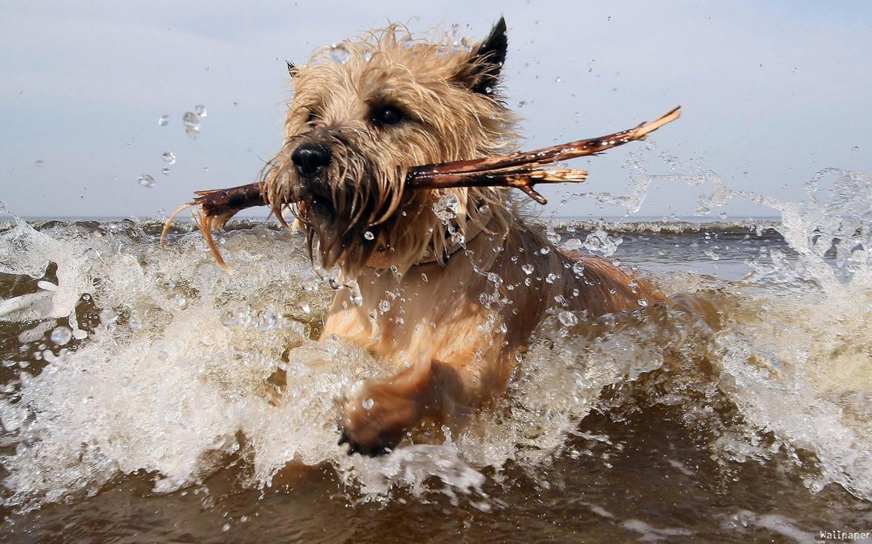 Фото 1 - прикольные собаки