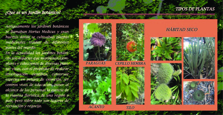 Trabajo de dise o folleto jard n bot nico for Plantas de un jardin botanico