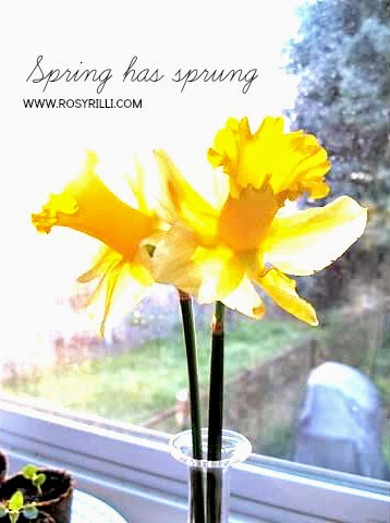 ROSYRILLI.COM Sweetly sour and surprise daffodils