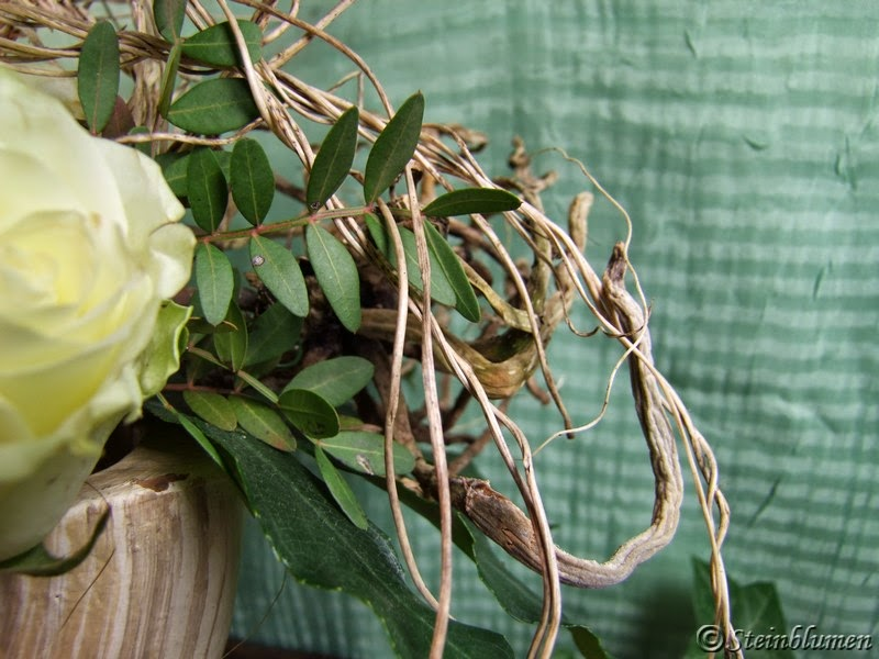 orchideenwurzel