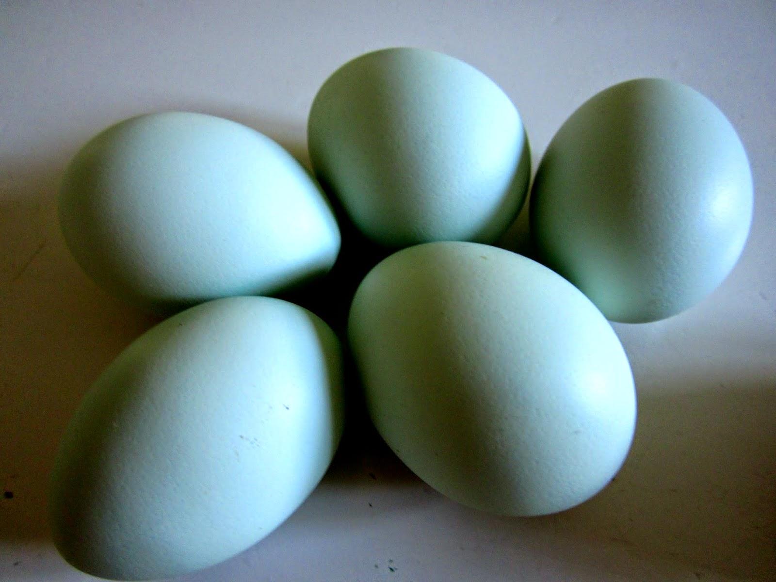 Grönvärpare, ägg, egna höns, höns, självhushållning