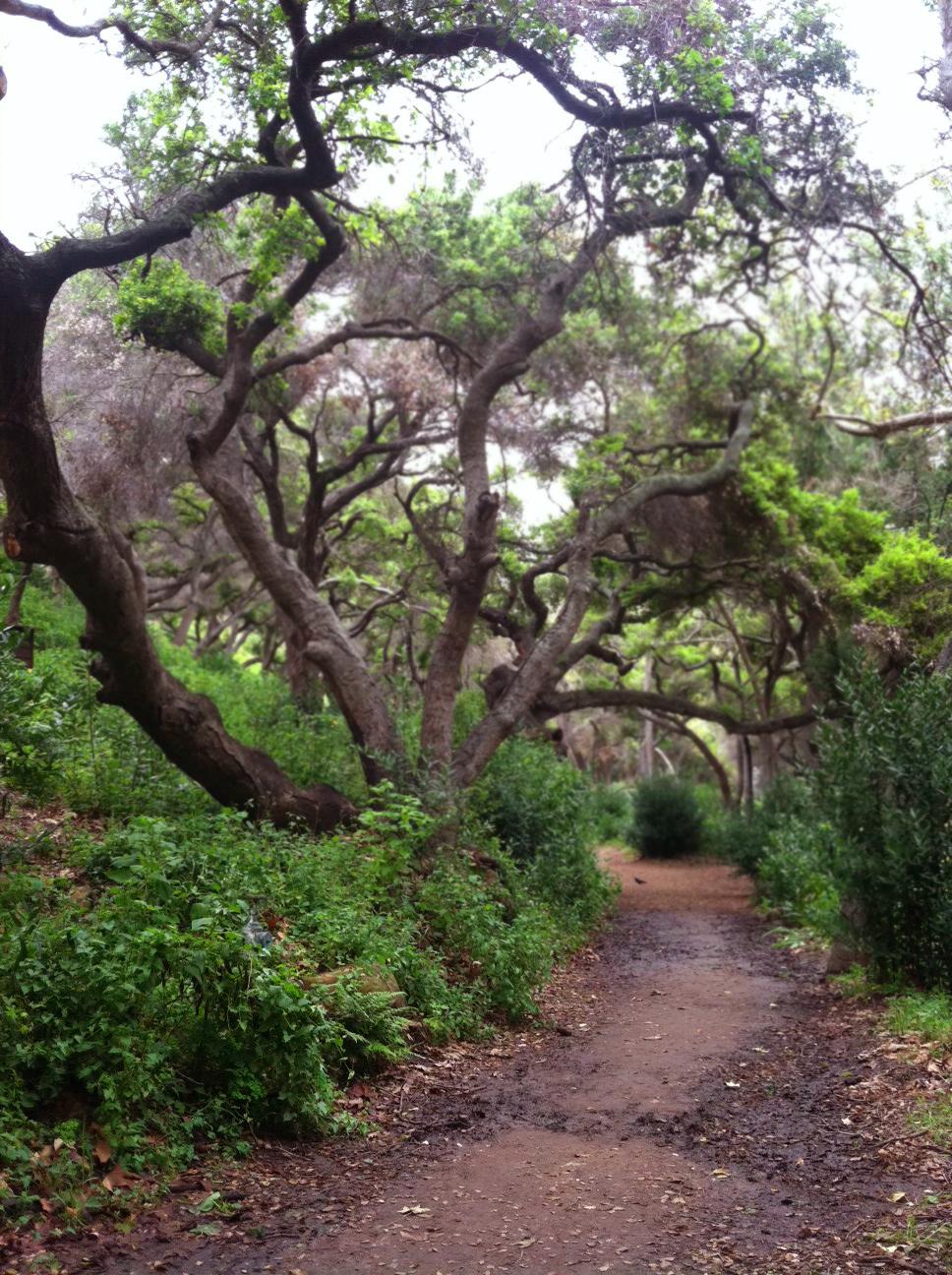 dirty blonde santa barbara botanic gardens