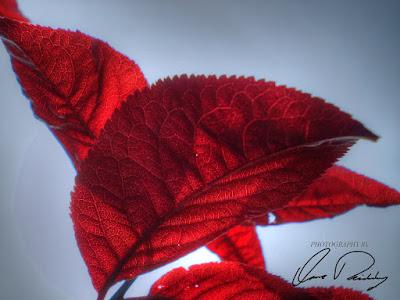 Skyward Branch Tree Trees Red Leaf Leaves Sky Sun Shine Shining Sunshine