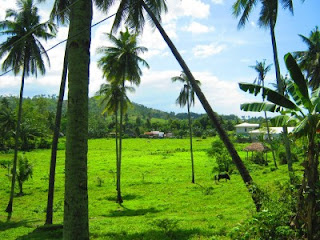 balamban meadows